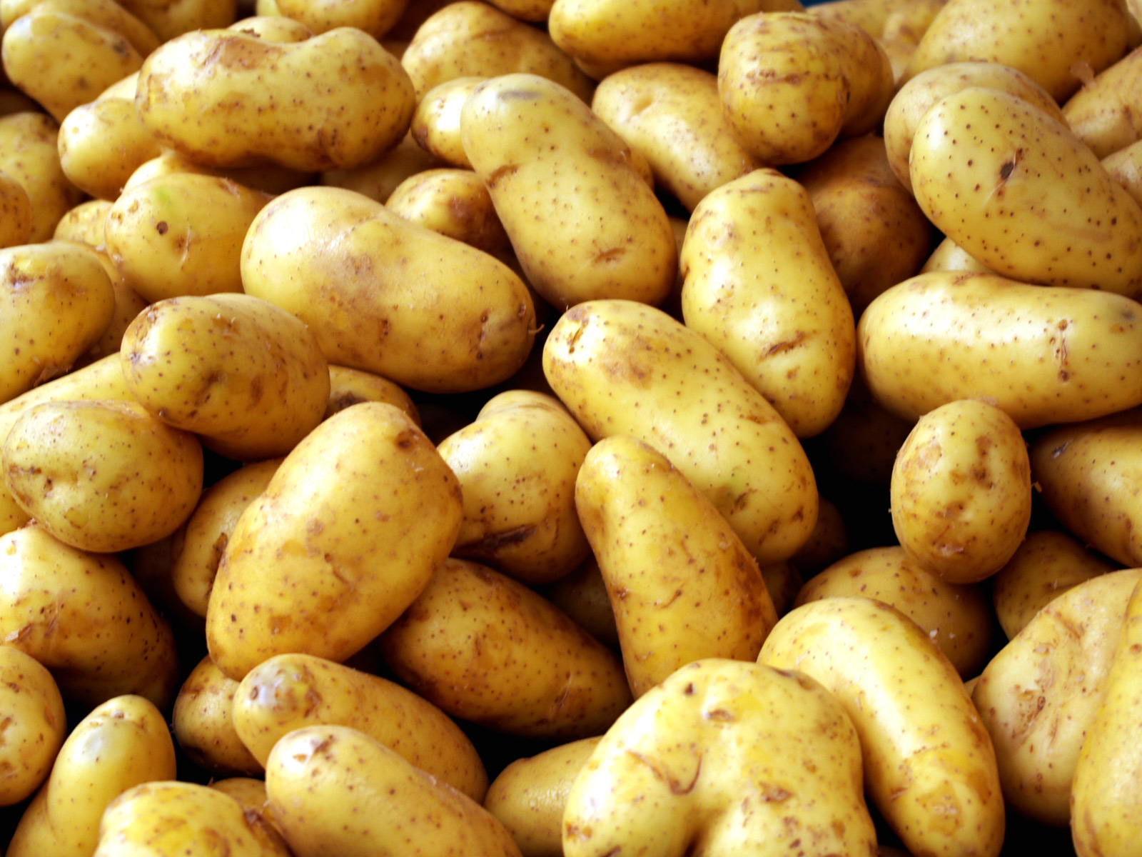 Hermes Seed Potatoes